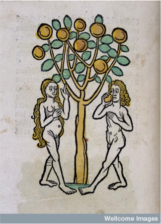 Adam and Eve and the Tree of Life: Ortus Sanitatis (Mainz: Jakob Meydenbach, 1491)