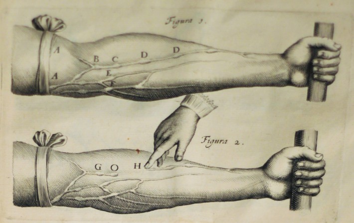 Fig. 2: Engraving from William Harvey's Exercitatio Anatomica de Motu Cordis et Sanguinis in Animalibus (Leiden, 1639). Osler Library Collection.