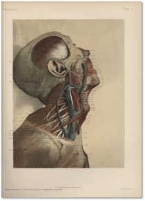 Painterly photographic anatomy. George McClellan, Anatomie des Régions… 2 vols., trans. Louis Tollemer (2d ed., Paris, 1906), vol. 1. Hagströmerbiblioteket. McClellan, professor of anatomy at Jefferson Medical College and at the Philadelphia Academy of Fine Art, performed the dissections, supervised the photography, and then painted painted over the pictures with watercolors.